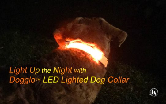 Dogglo LED Lighted Dog Collar